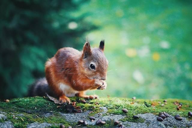 Überlebenstipps im Wald   lastminute Gutschein   www.gutschein-fuer-dich.com