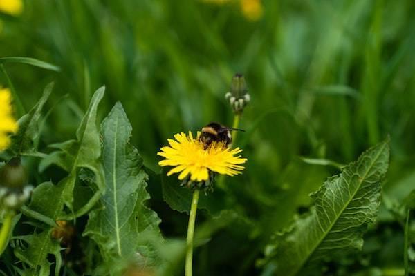 Insektensterben verhindern bei Rabatt-Coupon.com