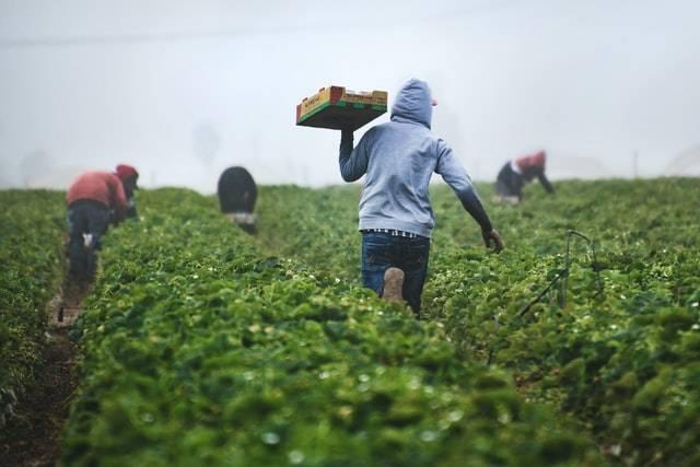 Grundnahrungsmittel in Afrika | Lebensmittel weltweit | Giordano Weine Gutschein
